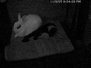 bunnywebcam2.jpg